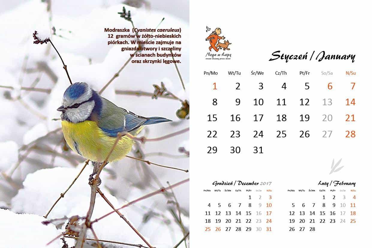 kalendarz Skrzydlaci Sąsiedzi