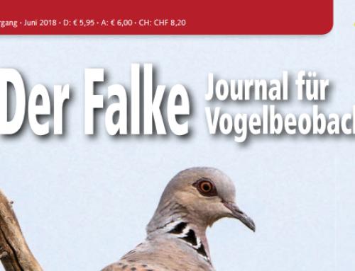 Raport (2): legalne polowania w Europie. Wywiady z CABS i BirdLife