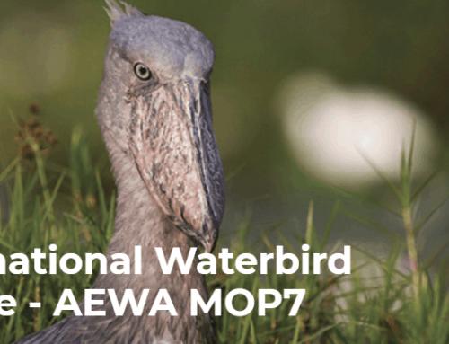 Raport z międzynarodowej konferencji ochrony ptaków wodno-błotnych, AEWA 2018