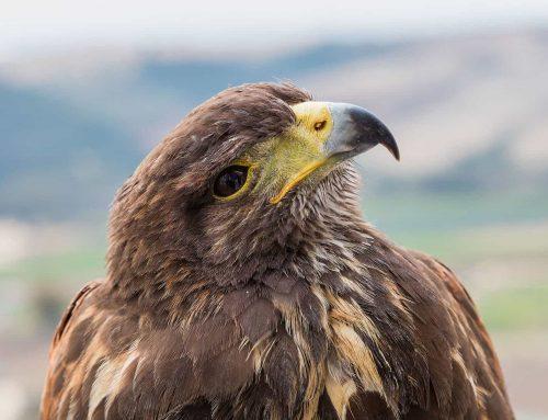 Adam i Karol. Dwa orły przednie zginęły jednego dnia w Szkocji.