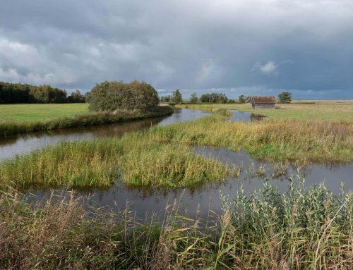 Po podróży do parku narodowego Matsalu w Estonii