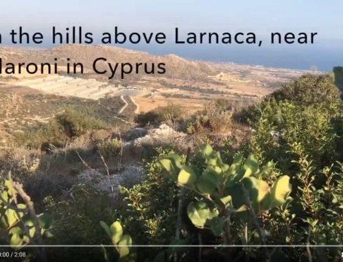 Cypr. Film pokazujący współpracę władz z kłusownikami